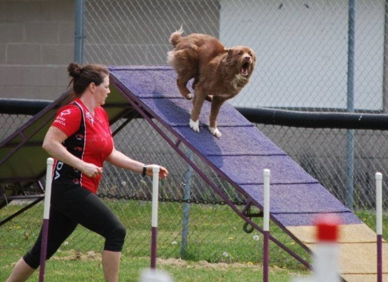 Shake-a-Paw Dog Training - Paola Hoger dog trainer ...
